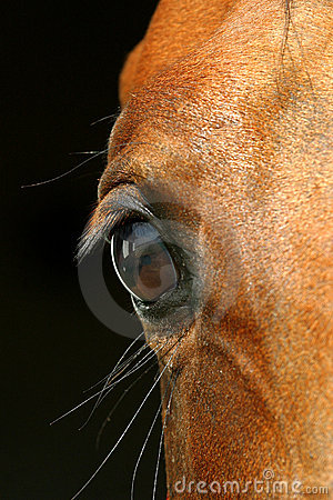 Free Eye Of A Horse Royalty Free Stock Images - 1199609