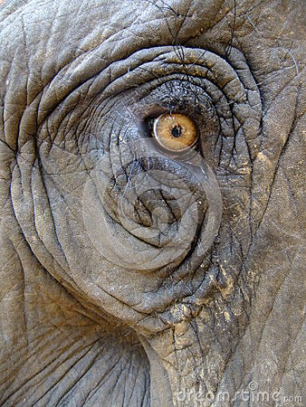 Free Eye Of An Elephant Stock Photos - 26112893