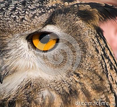 Free Eye Of Eagle Owl Stock Photo - 3429450
