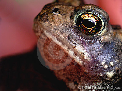 Eye of the Toad