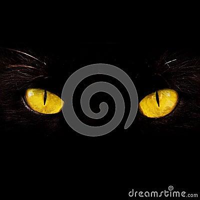 Free Eyes Stock Images - 4899774