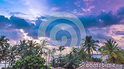 Färglöst grumlig solnedgång med palmtid bortfaller arkivfilmer