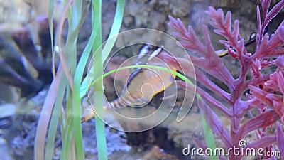 Färgrikt akvarium med den trevliga fisken arkivfilmer
