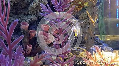 Färgrikt akvarium med många olik trevlig fisk arkivfilmer