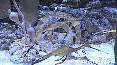 Färgrikt akvarium med många olik trevlig fisk stock video