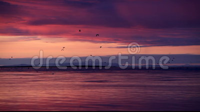 Fåglar på flyget på solnedgången