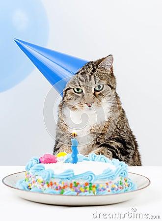 Pitchoune  F-ecircte-d-anniversaire-de-chat-thumb8552033