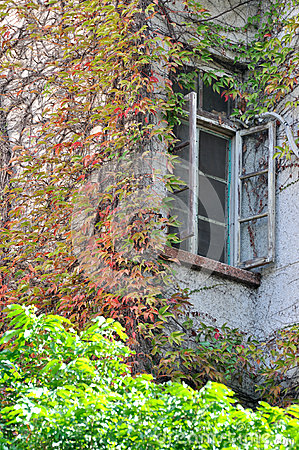 Fönstret och färgar lämnar
