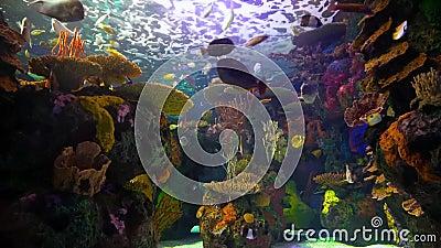 för teckningsfisk för akvarium svart linje white lager videofilmer