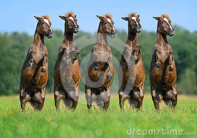 Fünf hintere Ponys