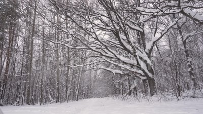 Fabelachtig de winter ijzig wit bos met donkere boomboomstammen 1 stock videobeelden