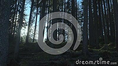Fabelachtig die bos door zonstralen wordt doordrongen die avonturen, mooie aard verzoeken stock videobeelden