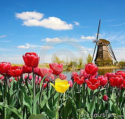 fabelhafte landschaft der m hle und der tulpen in holland stock abbildung bild 56686800. Black Bedroom Furniture Sets. Home Design Ideas