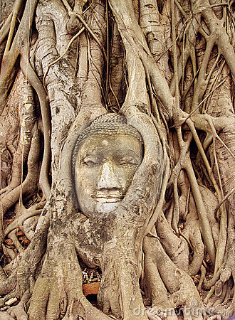Free Face Carved In Tree Royalty Free Stock Image - 5669396
