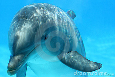 Face Of Dolphin