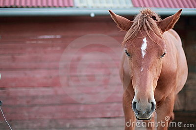 Face of a horse