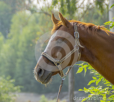 The face of horse