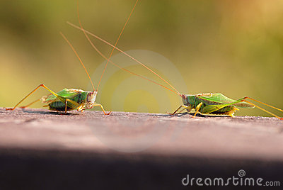 Face Off, Bug Style