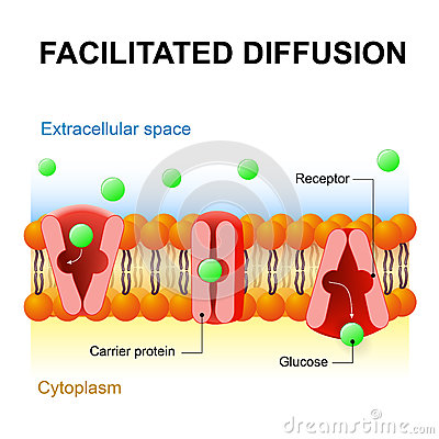 diffusion and osmosis abstract Diffusion and osmosis abstract in this diffusion and osmosis lab a total of three experiments were performed for experiment 51 we investigate diffusion through a selectively permeable membrane and the many factors that influence the rates of diffusion.