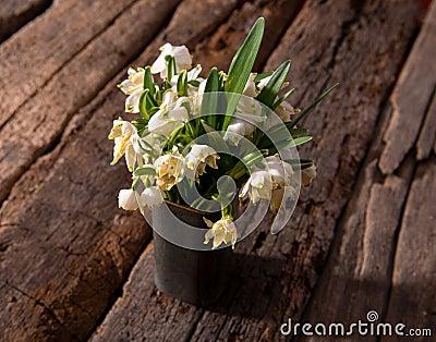 Fading snowdrops in vase