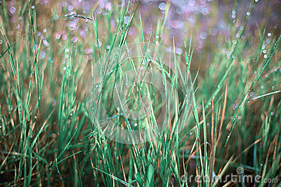 Faerie lights grass