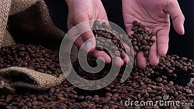 Fagioli di caffè chiusi Le donne stringono il caffè con le mani video d archivio