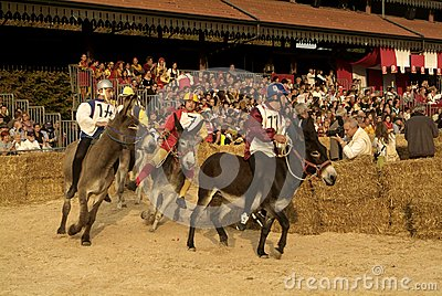 Fair and white truffle of Alba donkey race. Editorial Stock Image