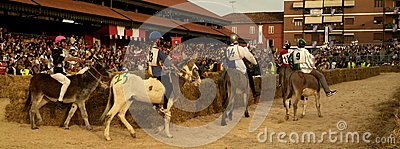 Fair and white truffle of Alba donkey race. Editorial Photography