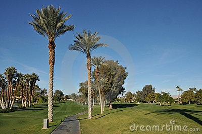 Fairway van het golf met karweg en palmen
