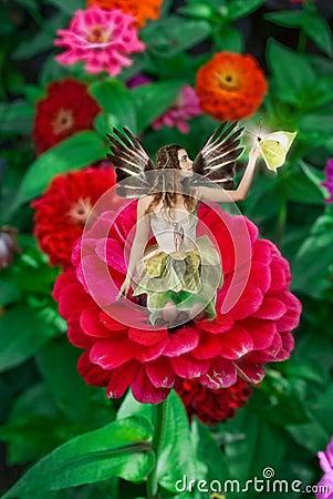 Fairy on Dahlia