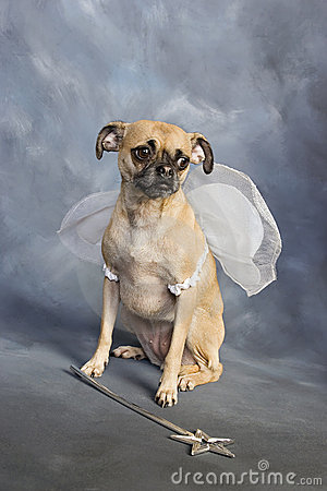 Fairy Dog Princess