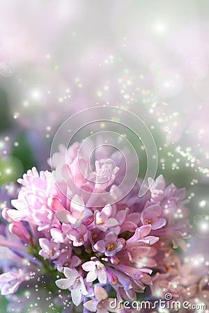 Free Fairy Dust On Lilac Stock Photos - 2664663