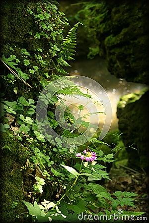 Free Fairy Fantasy Rainforest Woods Royalty Free Stock Photo - 3497515