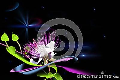 A fairy flower