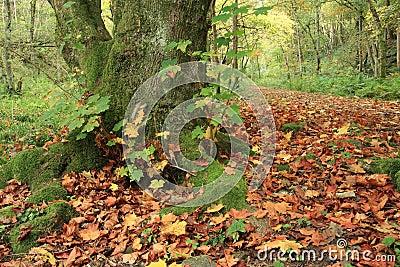 Fairy Glen, Rosemarkie, Highlands of Scotland