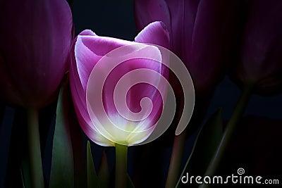 Fairy-tale flower