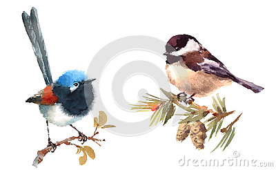 Fairy Wren and Chickadee Birds Watercolor Illustration Set Hand Drawn Cartoon Illustration