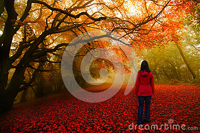 Fairytale forest red path