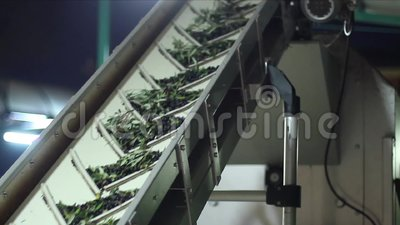 Faites l'huile clips vidéos