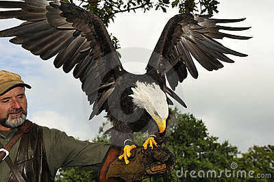 Falconer with Bald eagle