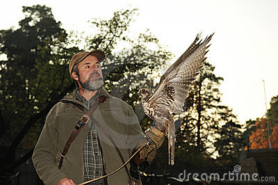Falconer with Falcon,falco cherrug .