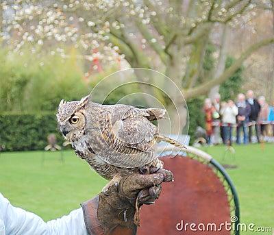 Falconry: Owl