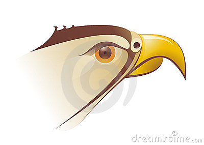 Falcons head Illustration in vector