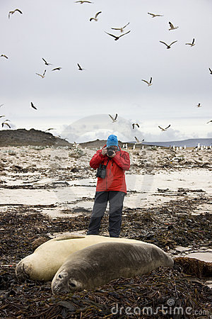 Falkland Islands - Tourist photographing seals
