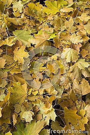 Free Fall Royalty Free Stock Photo - 11669395