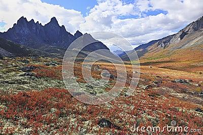 Fall arctic landscape