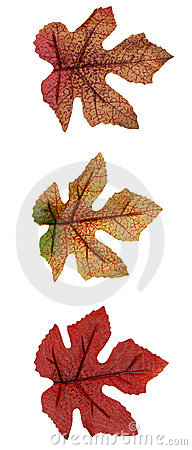 Free Fall: Artificial Leaves Royalty Free Stock Photos - 24908