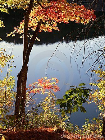Fall - autumn: sunlit colorful leaves