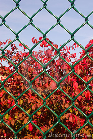 Fall behind the fence