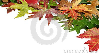 Fall border with autumn leaves